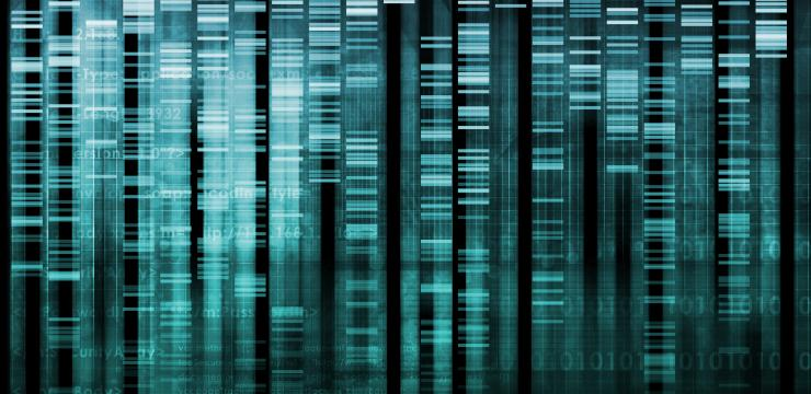From antioxidants to Cardiovascular Index to gene expression