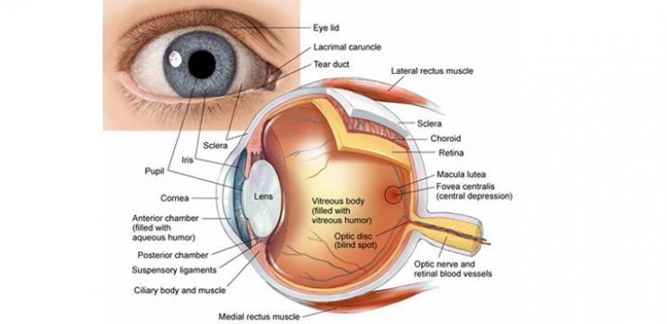 Retinopathy and Diabetes